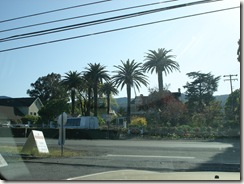 DSC06180 thumb CALIFORNIA WINERY TOUR