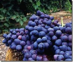 Winery thumb Economy Hurting Luxury Wine Market