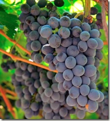 cabernet2 thumb Wine 101 The Big Red Grapes