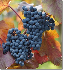 cabernet3 thumb Some Updated Wine Store Website's