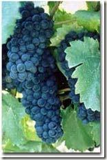 grapes thumb WINE NEWS