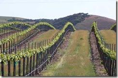 header winery vineyards thumb Economy Hurting Luxury Wine Market