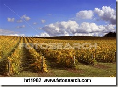 vineyardfallcolors HRT1902 thumb WINE REGIONS